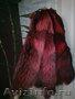 в Санкт-Петербурге шкуры енота натурального цвета и красного цвета, Объявление #286427
