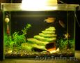 аквариум на 40 литров с рыбками