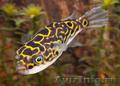 рыбки красавцы экзотика и дресерованные