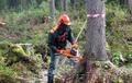 Лесоруб. Спиливание,  сруб,  удаление деревьев целиком и частями