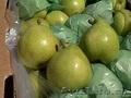 Прямые поставки  груши,  яблок  из Аргентины, Чили