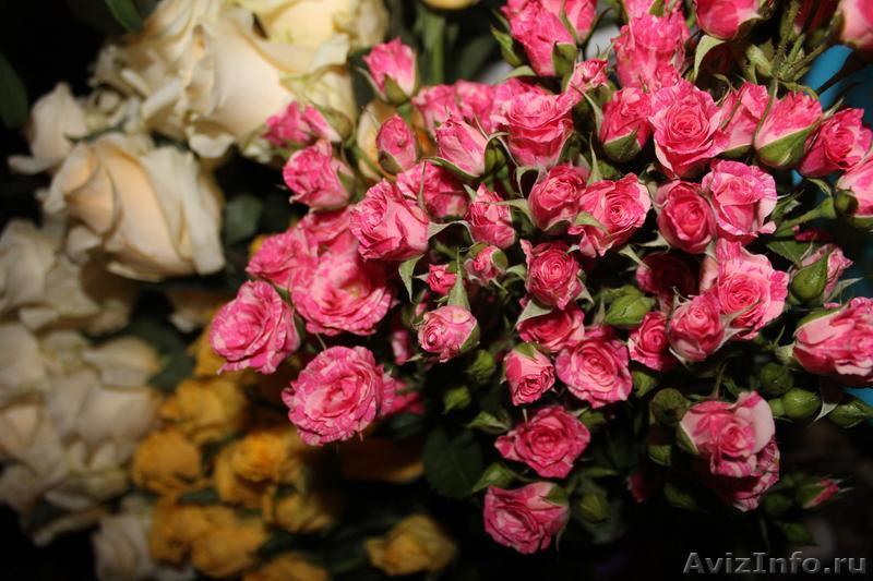 Роза с мелкими цветами фото и названия
