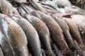 Рыба оптом повсей России