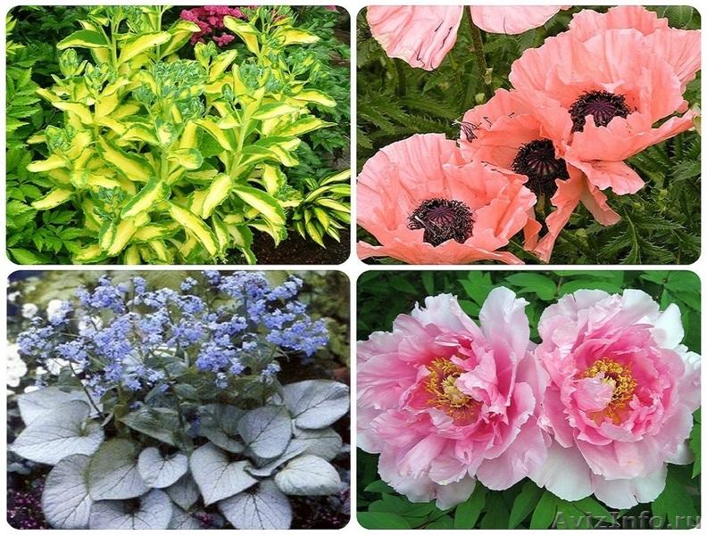 Цветы почтой многолетники