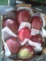 Продаем манго из Испании, Объявление #1455742
