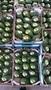 Продаем авокадо из Испании - Изображение #1, Объявление #1455738