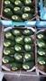Продаем авокадо из Испании - Изображение #2, Объявление #1455738