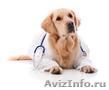 Ветеринарная помощь на дому,  все районы СПб.