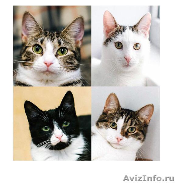 Обалденные котята ищут папу и маму, Объявление #1484585