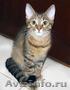 В хорошие руки отдаются котята-бандиты, Объявление #1484583