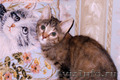 В хорошие руки отдаются котята-бандиты - Изображение #2, Объявление #1484583