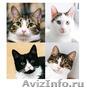 Обалденные котята ищут папу и маму - Изображение #1, Объявление #1484585