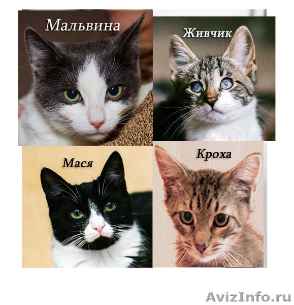 Суперласковые котята ждут папу и маму, Объявление #1484584