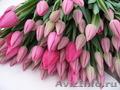 Тюльпаны от производителя к 8 марта - Изображение #5, Объявление #1198674