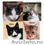 Суперласковые котята ждут папу и маму - Изображение #1, Объявление #1484584