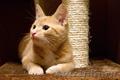 Рыжий котенок огонёк ищет дом