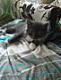 Отдадим котенка Степу в добрые руки. , Объявление #1577720
