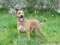 Элис удивительная собака с яркой внешностью ищет дом