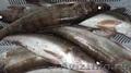 Живая рыба с рыбхоза. Доставка., Объявление #1589334