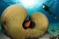 Яркий отдых на Красном море - Эйлат