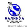Кастрация кошек и собак в Санкт-Петербурге